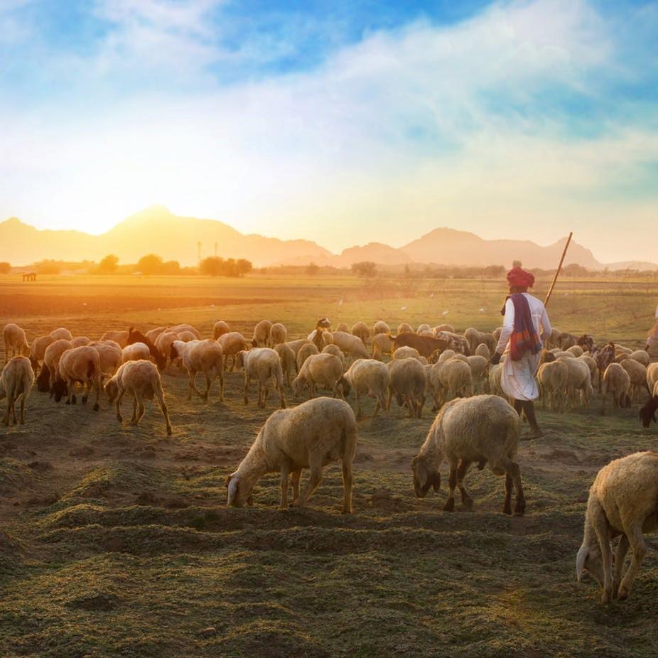 01/04/2020 – Bible Study – John 10: 1-21 – The Good Shepherd